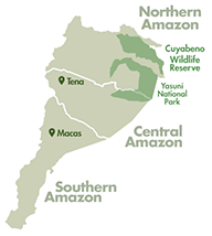 amazon regions in ecuador